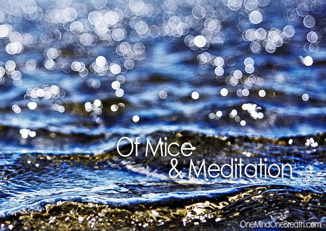 meditation 0x640